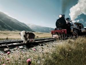 Van treinen en koeien