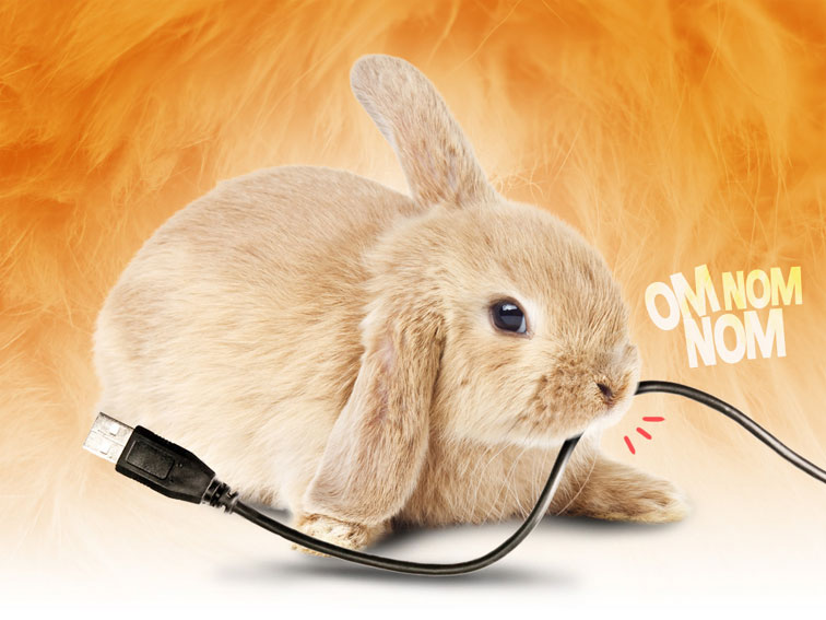Katholieke konijnen